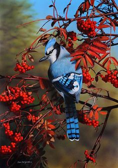 The blue jay is a strikingly beautiful, 11- to 12 1/2-inch bird, among the most familiar birds of North America. The bird's call is a defiant jay-jay, often sounded in a discordant chorus with other jays, setting up a commotion if an enemy is spotted. Blue jays also mimic other birdcalls.  -You may also like video: https://www.youtube.com/watch?v=iItXKBombE8   -Image source: http://www.natureartists.com/artists/artist_artwork.asp?ArtistID=1293&ArtworkID=27558