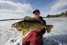 Early Ice Walleyes – Tips and Secrets Walleye Ice Fishing Lures, Best Fishing Lures, Usa Fishing, Trout Fishing, Kayak Fishing, Ice Fishing Sonar, Ice Fishing Tips, Giant Fish, Big Fish