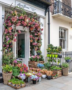 Moyses Stevens Floral Shop in London Best Places In London, Things To Do In London, Free Things To Do, Flower Shop Design, Flower Shop Decor, Flower Shops, London Blog, Today Is My Birthday, At Home Store