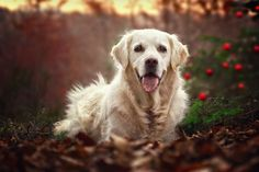 A 8 kutyából melyiket vinnéd haza legszívesebben? Sokat elárul a személyiségedről! - Egy az Egyben