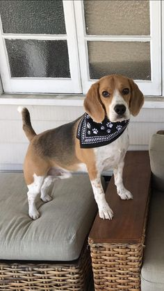 My mum says Im a handsome boy - Your Daily Dose of Cute Puppies and Amazing D. Beagle Puppy, Vizsla Puppies, Dogs Pitbull, Pomeranian Puppy, Cute Beagles, Cute Puppies, Cute Dogs, English Dogs, English Setter