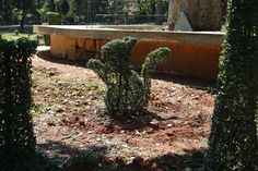 Topiary squirrel hand clipped by the gardeners at the gardens.