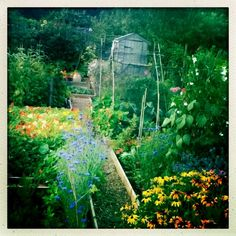 View of my allotment this evening. #allotment #plot18a