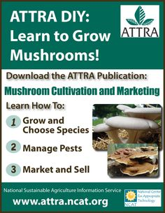 Most people who go in for mushroom growing just go out and buy both the spores (or spawn) and the growth medium. They do this because this is the easiest way to grow mushrooms. But if you are thinking of growing mushrooms commercially Garden Mushrooms, Edible Mushrooms, Growing Mushrooms, Stuffed Mushrooms, Wild Mushrooms, Agriculture Information, Mushroom Species, Mushroom Cultivation, Organic Protein