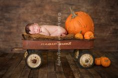 newborn baby boy sleeping in a wagon with pumpkins photographed by San Francisco newborn photographer Sarka Trager