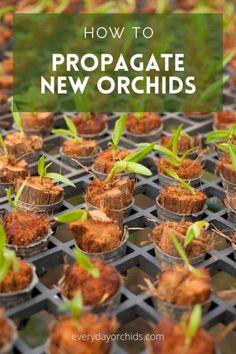 Indoor Orchids, Orchids Garden, Indoor Plants, Orchid Plant Care, Orchid Plants, Orchid Flowers, Growing Orchids, Growing Plants, Veg Garden