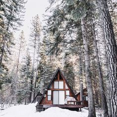 city refuge. A frame cottage surrounded by tall pines