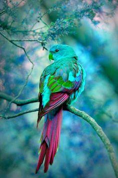 Absolutely Lovely - Australia ~~ For more:  - ✯ http://www.pinterest.com/PinFantasy/fauna-~-aves-birds/