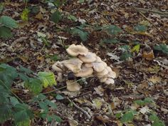 Amerongse berg Stuffed Mushrooms, Vegetables, Winter, Stuff Mushrooms, Winter Time, Vegetable Recipes, Veggies, Winter Fashion