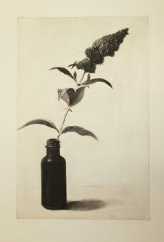 Judith Rothchild(American, b.1950)  Buddleia     2001  mezzotint