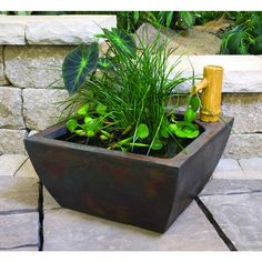 Perfect Aquatic Patio Pond Kit | Up On The Rooftop | Pinterest | Pond Kits, Patios  And Gardens