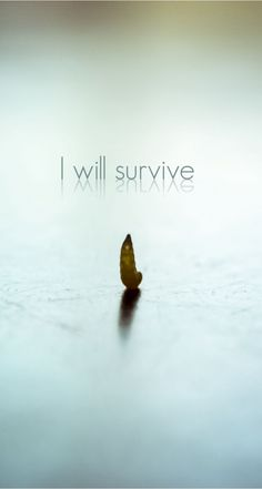 """I will survive""! Get it for your #iPhoneRetinaWallpaper, #iPhoneWallpaper!  Find out more #quote galleries at http://iphone5retinawallpaper.com/gallery.php?cat=quotes"