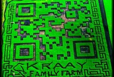 Family's 309,570 square feet QR code sets Guinness World Record