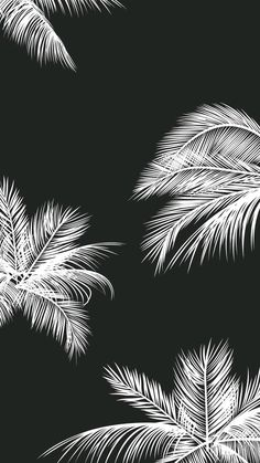 Black white palm leaves palm trees iphone background phone wallpaper lock screen – White and Black Wallpaper Locked Wallpaper, Tumblr Wallpaper, Screen Wallpaper, Cool Wallpaper, Mobile Wallpaper, Wallpaper Backgrounds, Iphone Backgrounds, White Backgrounds, Wallpaper Ideas