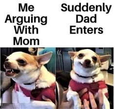 Dog Jokes, Funny Dog Memes, Cute Memes, Crazy Funny Memes, Really Funny Memes, Funny Relatable Memes, Funny Stuff, Funny Things, Very Funny Gif