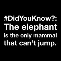 #DidYouKnow?: The #elephant is the only #mammal that can't #jump.