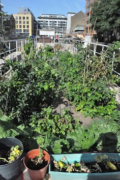 Bettinas blad, a floating allotment in London. Cool.
