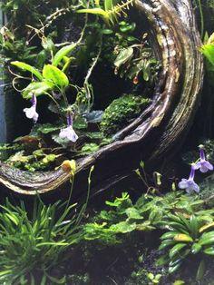Post with 3740 views. 12 x 18 Mini Orch terrarium Orchid Terrarium, Glass Terrarium, Dendrobates Terrarium, Build A Terrarium, Floating Plants, Orchid Care, Vivarium, Reptiles And Amphibians, Edamame