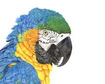 Macaw Watercolor painting- print of watercolor painting A3 size largest print