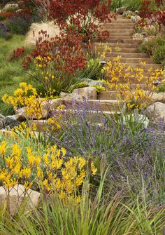 native garden for your inspiration. our favorite natives 3 tips for a high impact australian garden Low Water Landscaping, Hillside Landscaping, Hillside Garden, Sloped Garden, Landscaping Ideas, Landscaping Software, Luxury Landscaping, Driveway Landscaping, Australian Native Garden