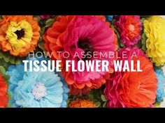 How to Assemble a Tissue Flower Wall Backdrop Pom Pom Flowers, Tissue Pom Poms, Tissue Paper Flowers, Flower Wall Backdrop, Paper Backdrop, Wall Backdrops, Spring Blooms, Spring Flowers, Mad Hatter Tea