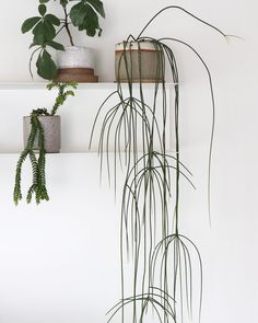 49 BEST Hanging Plants in Home Decor;