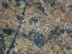 Freudenbergite (noir) avec Rutile dans xenolithe.  Kaskasnyunchorr, Khibiny, Kola, Russie FOV=12 mm Photo Pavel M. Kartashov