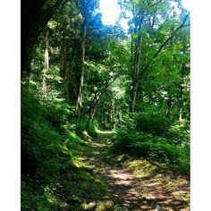 【kaminoporo】さんのInstagramをピンしています。 《#小谷 #塩の道 #千国街道 #古道 #森 #otari #chikuni #soltroad #shionomichi #street #traditional #forest》