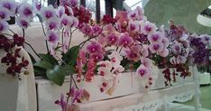 House Plants, Planting Flowers, Floral Wreath, Home And Garden, Wreaths, Decor, Gardening, Best Pictures, Flowers