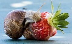 Allontanare le lumache dal nostro orto o giardino in maniera naturale