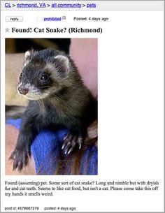 Some Sort Of Cat Snake