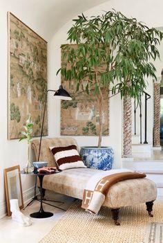 ... indoor plant