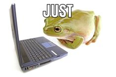 Frog Pictures, Funny Pictures, Cute Memes, Funny Memes, Frog And Toad, Frog Frog, Cute Frogs, Pinterest Memes, Fb Memes
