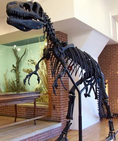 Joseph Moore Museum of Natural History. On the campus of Earlham College, Richmond, IN
