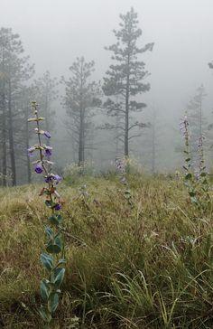 Land of Mist | By evakatharina12
