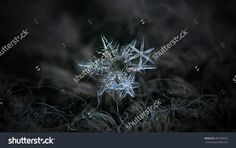 Snowflakes Glowing On Dark Gray Wool Background. This Is Macro Photo Of Three Stellar Dendrite Snow Crystals In Cluster, With Ornate Arms And Sharp Edges. - 487569601 : Shutterstock