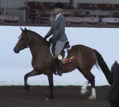 """Bit O Honey was 2001 Reserve WPCSA National Champion Section C/D Filly as a yearling.  She was only 2 points behind the Champion, and missed her last two shows of the year due to an injury.  Bit O Honey is owned by Karla Knuckles.  Back in the show ring in 2004 for the first time since 2001, Honey had a great year!  Pictured above taking the Reserve Ridden Championship at the Santa Barbara National show with Kim Boyd riding. """"Honey"""" completed one leg of her sire's and dam's Legion of Merit!"""
