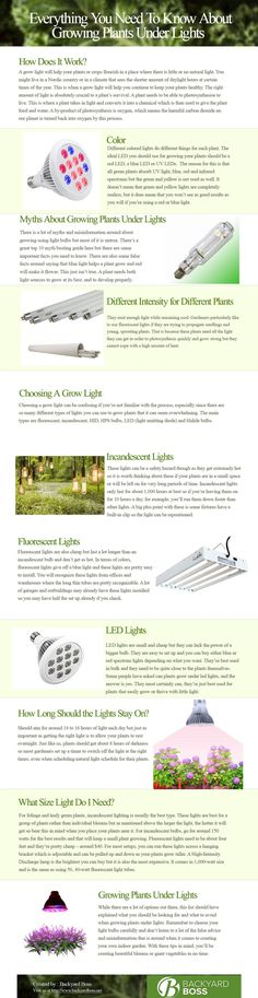 Growing Plants Under Lights - Everything You Need To Know