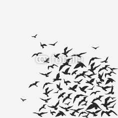 Wall Mural birds - isolated - white - nature • PIXERSIZE.com