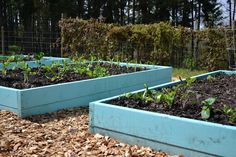 raised bed garden, I love that they are painted! Adds a cheery touch.