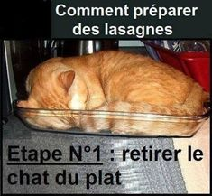 Step Make Lasagna - LOLcats is the best place to find and submit funny cat memes and other silly cat materials to share with the world. We find the funny cats that make you LOL so that you don't have to. Cute Funny Animals, Funny Animal Pictures, Funny Cute, The Funny, Funny Pics, Hilarious, Funny Sayings, Funniest Animals, Funny Stuff