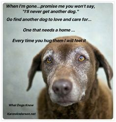 """Promise me you will never say, """"I'll never get another dog"""" 😢 Oh my heart! Our pups won't ever be replaced, but we can love another one just like our previous ones I Love Dogs, Puppy Love, Cute Dogs, Der Boxer, Miss My Dog, Pet Loss Grief, Dog Poems, Pet Remembrance, Cute Animals"""