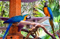 2017-03-16 - blue and yellow macaw wallpaper hd pack, #1419915