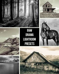 Free Download - Dramatic Black and White - Lightroom Presets