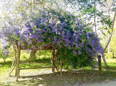 Jardín Botánico de Caguas