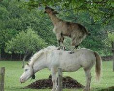 kick-your-own-butt-animals-helping-professionalvas