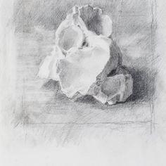 Brackish (Solaia) Claudia Carr Pencil on Paper | 26 x 34 cm