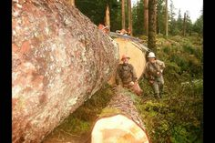 Modern-day timber fallers