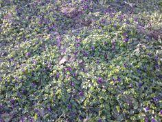 violette al parco Lambro