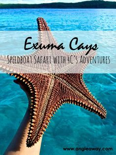 Swimming pigs, endangered pink iguanas, starfish as big as your head and friendly Bahamian sharks - you can only see all these critters on a speedboat safari in Exuma, Bahamas!